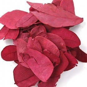 Dried Claret Leaves about 850pcs/pkg
