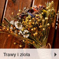 Trawy i zioła zboża kołosy