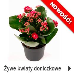 Kwiaty i rośliny doniczkowe żywe SKLEP HURT