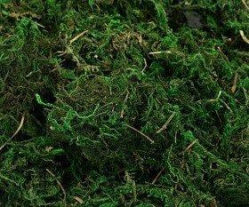 Mech, dekoracyjny zielony duża paczka 100 g/op. ok 2 litra
